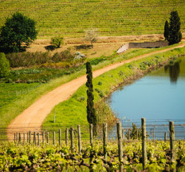 Zebonki-beer-in-the-vineyards-7621
